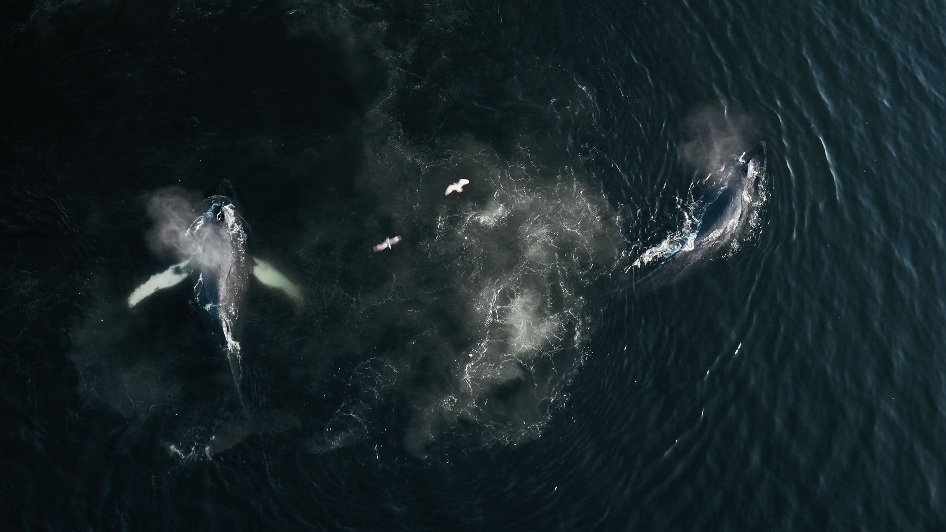 Reel Causes partners with VIFF to present The Whale and the Raven